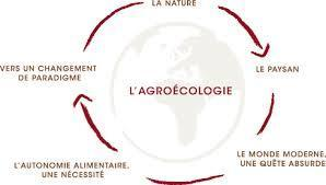 Appellations d'origine : L'agroécologie intégrera les cahiers des charges - La France Agricole | agroforesterie, agroecologie | Scoop.it