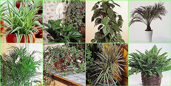 Plantes dépolluantes dans la maison-Décoration au naturel-Plus de Coton   Décoration_PlusDeCoton   Scoop.it