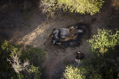 Authorities 'Fighting A Counter-Insurgency' Against Rhino Poachers | Kruger & African Wildlife | Scoop.it