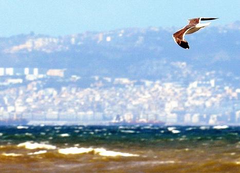 L'Algérie et moi | développement personnel | Scoop.it