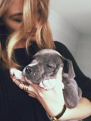 CelebCon - Puppy Love Special - Herald Sun | Dogs Gone Wild | Scoop.it