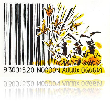 OGM : France / Europe – Le troisième arrêté français d'interdictiondu maïs MON810 adopté, attaqué... et critiqué par l'AESA | Abeilles, intoxications et informations | Scoop.it