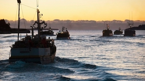 Lobster fishery is booming, but there's a problem — a boat shortage | Nova Scotia Fishing | Scoop.it