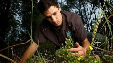 Sydney region's first new plant find in decades | Australian Plants on the Web | Scoop.it