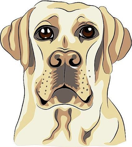 Animal Tales: Dogs like Chessie are good teachers for lessons in life   Pet News   Scoop.it