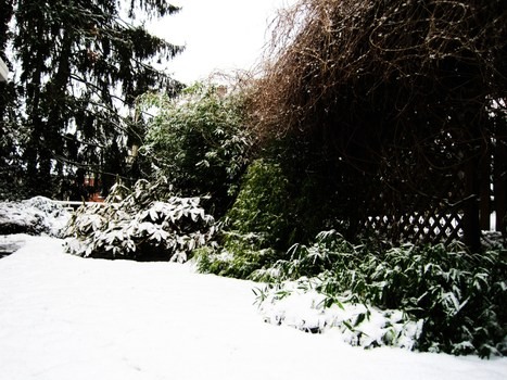 Un jardin belge sous la neige | Côté Jardin | Scoop.it