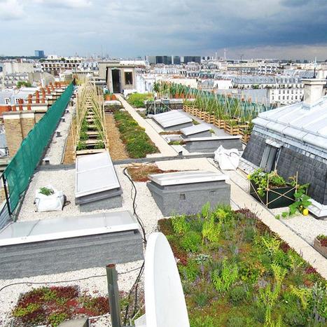 Un potager sur un toit dédié à la recherche | Chimie verte et agroécologie | Scoop.it