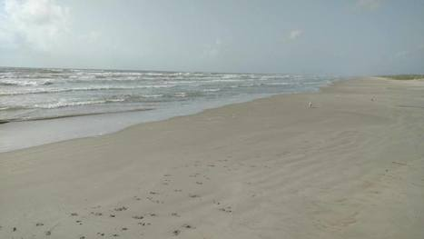 Algae bloom known as red tide shows up along Texas coast | Texas Coast Living | Scoop.it