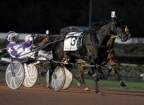 Stars shine at Breeders Crown - Citizens Voice | Amazing Rare Photographs | Scoop.it