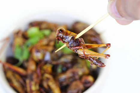 The Benefit of Eating Insects - Blog | Entomophagy: Edible Insects and the Future of Food | Scoop.it