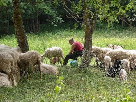 Voici pourquoi je (re)mange de la viande | Pour une agriculture et une alimentation respectueuses des hommes et de l'environnement | Scoop.it