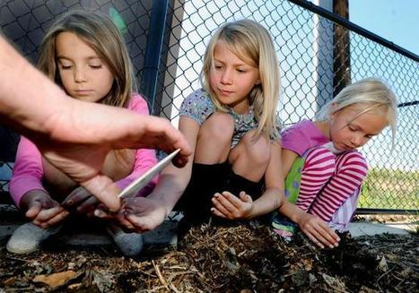 Sprouting healthy habits: Gardens proliferate at Boulder Valley, St. Vrain schools | School Gardening Resources | Scoop.it