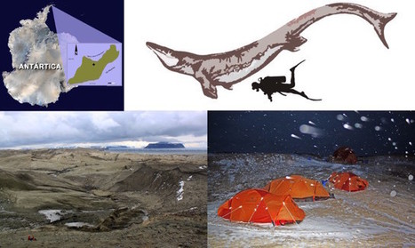 Kaikaifilu hervei was a mosasaur that lived in the Antarctic seas | Science and technology | Scoop.it