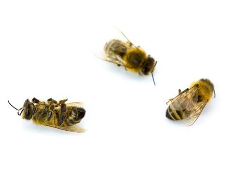 Deux laboratoires expliquent l'hécatombe d'abeilles | Toxique, soyons vigilant ! | Scoop.it