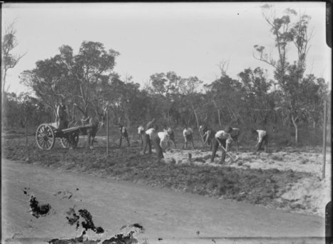 008802PD: Squad of returned soldiers preparing the Honour Avenue in Kings Park to be opened by his Excellency the Governor on August 3, July 1919 :: slwa_b2946445_2 | Kings Park History | Scoop.it