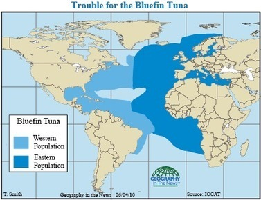 Geography in the News: Bluefin Tuna Decline | Geography in the News | Scoop.it