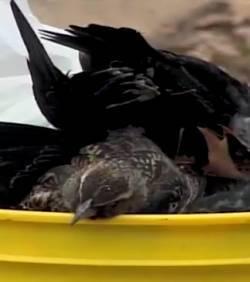Une pluie d'oiseaux morts s'abat sur une ville de l'Arkansas | Mais n'importe quoi ! | Scoop.it