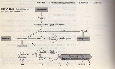 preguntas y nueva lectura biomoléculas 10 - CIENCIAS LICEO ... | Química-Biología | Scoop.it