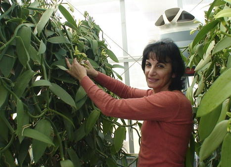 Nothing vanilla about building a better bean | Permaculture and Green Living | Scoop.it