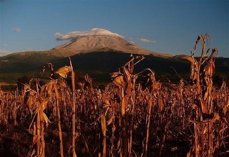 Sin maíz no hay país - ROOSTERGNN | Cultura Eco Gastronómica | Scoop.it