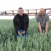 Changing weather patterns to hit wheat yields | Agricultural Research | Scoop.it