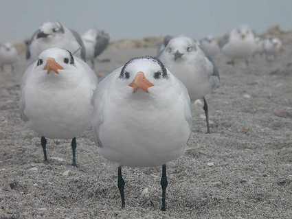 Sea Level Rise May Happen Too Quick For Shore Birds To React | Climate change challenges | Scoop.it