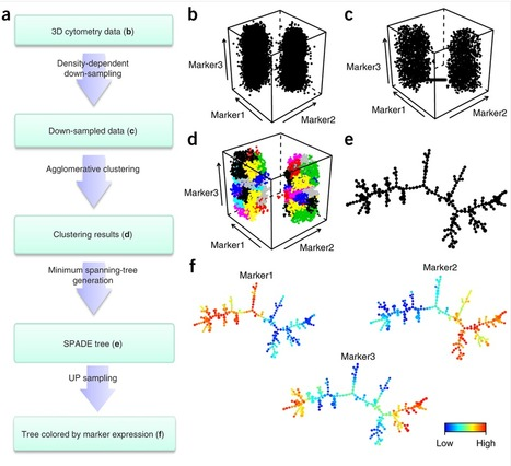 Visualization and cellular hierarchy inference of single-cell data using SPADE : Nature Protocols : Nature Publishing Group | Single cell genomics and transcriptomics | Scoop.it
