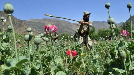 Afghan Opium Trade Thriving Despite US $7B Effort - 6abc.com   Etrade AUSTRALIA   Scoop.it