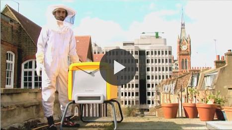 Beehaus : La ruche en plastique... | ECONOMIES LOCALES VIVANTES | Scoop.it