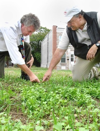 Radishes get tryout as runoff fighters in Baltimore lot | Vegetable Gardening Resources | Scoop.it