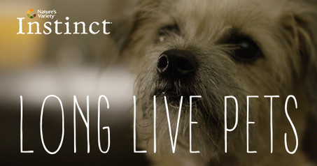 Long Live Pets: A social film about second chances | Interactive & Immersive Journalism | Scoop.it