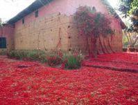 Tatiana Blass - Obras #Art #Instalations #Culture #Brazil | No. | Scoop.it