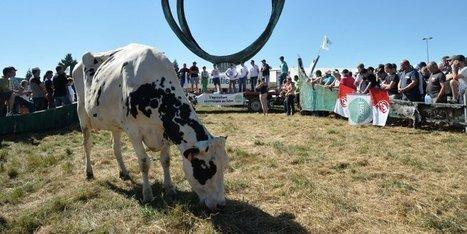 Producteurs de lait : d'où vient la crise ? Comment la régler ? | Agriculture en Dordogne | Scoop.it