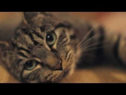 A Cat's Guide To Taking Care Of Your Human | Entrepreneurs | Scoop.it
