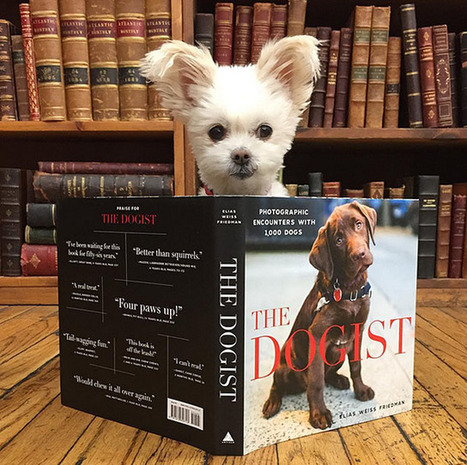 The World's Cutest Book Seller Resides at New York City's Iconic Strand Book Store   News For public   Scoop.it