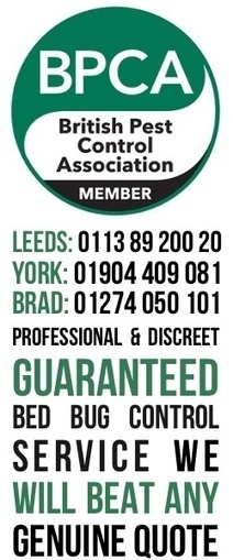 Bed Bug Treatments Leeds, Bradford, Greater Manchester, Harrogate, Sheffield Skipton, York - Pestek Pest Control | Pest Control Leeds | Pest Control Products | Pestek Pest Control | Scoop.it