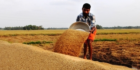 ODISHA, INDIA: Dhenkanal in Odisha is a proof that agriculture can co-exist harmoniously with industrialisation | Selected News from SRI-Rice: April 2016 **sririce.org | Scoop.it