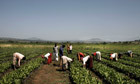 The myths surrounding the global rush for farmland   Food issues   Scoop.it