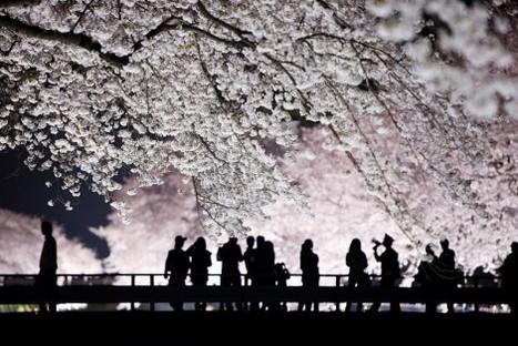 De retour de Fukushima, où le silence et les mensonges tuent | Corinne LEPAGE | Scoop.it