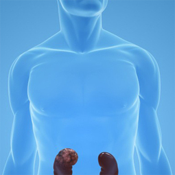 About Kidney Stones and How to Beat Them | Health News | Scoop.it