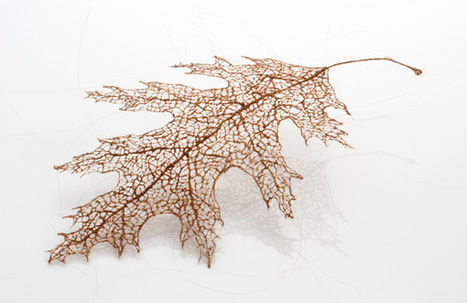 Tree Leaves Made of Stitched and Knotted Human Hair | Arts graphiques | Scoop.it