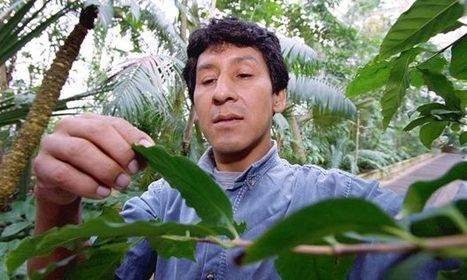What could help make the future of coffee farmers more sustainable? - The Guardian | Coffee News | Scoop.it