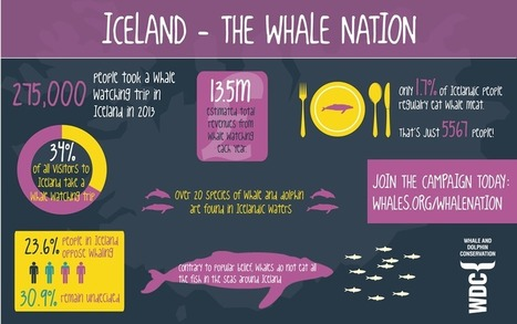 Support Iceland - Support a Whale Nation - WDC, Whale and Dolphin Conservation | Introduce new course in schools called COMPASSION | Scoop.it