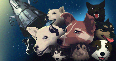 A Tribute To Soviet-Era Space Dogs (Infographic)   IELTS, ESP, EAP and CALL   Scoop.it