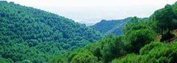 Calcular la biomasa y el carbono de los bosques - Actualidad Medio Ambiente | Biomasa, tecnología sostenible para un futuro duradero! | Scoop.it