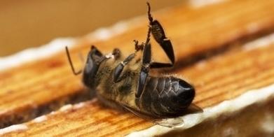 [Pétition] 24h pour changer le destin des abeilles | Toxique, soyons vigilant ! | Scoop.it
