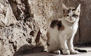 Israel Will Trap, Neuter and Return 45,000 Street Cats | Animal Cruelty | Scoop.it