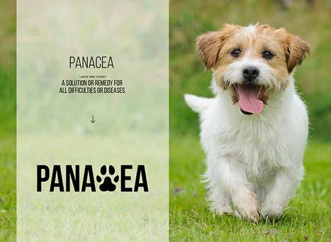 [ PANACEA ] For Dogs With Arthritis | Quantified Pet | Scoop.it