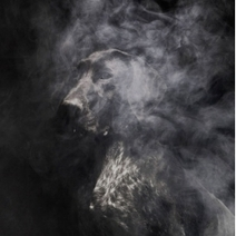 Gorgeous new photos from Martin Usborne. - Rival Animus | Photographers and Photographs | Scoop.it