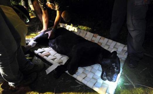 Brésil: sauver un jaguar sauvage dans la savane | Agir pour la biodiversité !